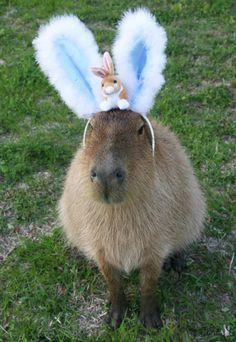 Capybara - Happy easter