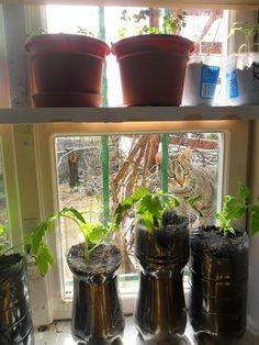 Planter Pots, Hacks, Pets, Garden, Decor, Garten, Decoration, Lawn And Garden, Gardens