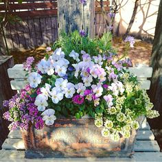 Buy Flowers Online Same Day Delivery Tokochan Style,, 2017117 Container Flowers, Container Plants, Container Gardening, Beautiful Gardens, Beautiful Flowers, Indoor Gardening Supplies, Vintage Planters, Garden Planters, Garden Projects