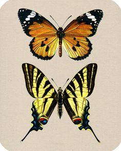 butterflies transfer