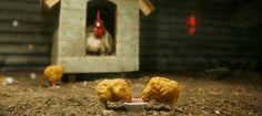 Qué hay de verdad dentro de los 'nuggets' (y no es precisamente carne de pollo)  - Noticias de Alma, Corazón, Vida