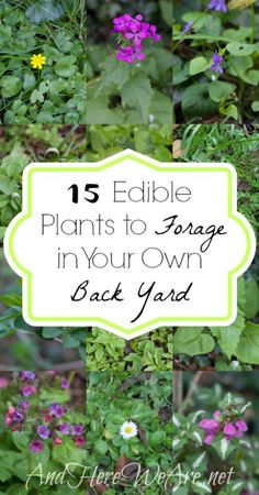 15 Edible Plants to Forage in Your Own Back Yard - And Here .- 15 Edible Plants to Forage in Your Own Back Yard – And Here We Are 15 Edible Plants to Forage in Your Own Back Yard – And Here We Are - Healing Herbs, Medicinal Plants, Carnivorous Plants, Edible Wild Plants, Wild Edibles, All Nature, Edible Garden, Edible Flowers, Ficus