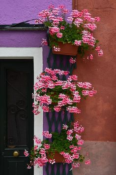 burano-italy_029_6099 Photo Look, Floral Wreath, Wreaths, Plants, Home Decor, Italy, Floral Crown, Decoration Home, Door Wreaths