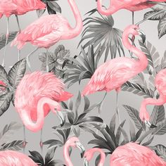 I Love Wallpaper Flamingo Wallpaper Pink Soft Grey - Wallpaper from I Love Wallpaper UK Boys Bedroom Wallpaper, Boys Wallpaper, Bathroom Wallpaper, Pattern Wallpaper, Wallpaper Backgrounds, Iphone Wallpaper, Latest Wallpaper, Funky Wallpaper, Hippie Wallpaper