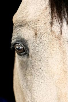 Equine eye Eye Images, Horses, Eyes, Animals, Animales, Animaux, Animal, Animais, Horse