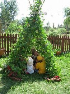 шпалеры для вьющихся растений своими руками,