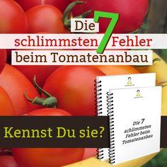 Kennst Du die 7 schlimmsten Fehler beim Tomatenbau? Vermeide sie und Du bist auf dem besten Weg zu einer ertragreichen Ernte!