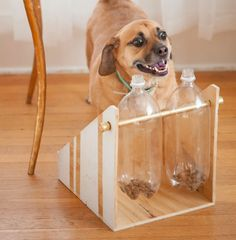 Easy DIY projects for my baby dogs!  Image via Daily Dog Tag