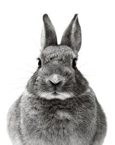 Kaninchen,2000