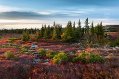 West Virginia Dolly Sods Wilderness   Flickr - Photo Sharing!