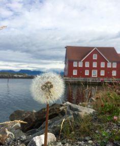 Норвегия остров Finnøya😊