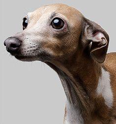Mario by Philip Gatward Smiling Animals, Cute Baby Animals, Animals And Pets, Funny Animals, Wild Animals, Baby Puppies, Dogs And Puppies, Pet Dogs, Dog Cat