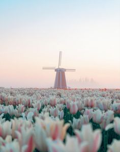 Spring Aesthetic, Nature Aesthetic, Travel Aesthetic, Beautiful World, Beautiful Places, Beautiful Scenery, Frühling Wallpaper, Landscape Photography, Nature Photography