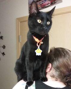 Little house panther turned parrot! #blackcatsrule #blackcatsofinstagram #blackcat #blackkitty #spoiled #cats #catlovers #catoftheday #catsofinstagram #instagramcats #instacat #furbaby #ilovemycat #neko #gato #animals #petstagram #petsagram #pets #adorable #adoptdontshop #sheltercats #parrot by raziel_and_onyx http://www.australiaunwrapped.com/