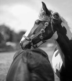 #horses#holland#blackandwhite