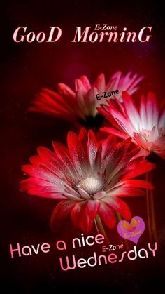 Good Morning Images Flowers, Good Morning Beautiful Images, Good Morning Picture, Morning Pictures, Good Morning Happy Sunday, Good Morning Greetings, Blessed, Blessings, Meme