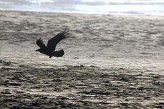 Wings! by laurapuglia403b