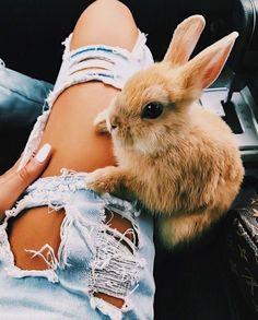 Das Kaninchen kann mit einem selbstaufopferndem Bein nix anfangen…aber auch sc… The rabbit can not do anything with a self-sacrificing leg … but also garnix ! Cute Little Animals, Cute Funny Animals, Cute Animals Kissing, Cute Baby Bunnies, Hunny Bunny, Tier Fotos, Cute Animal Pictures, Funny Pictures, Cute Creatures