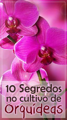 As orquídeas são consideradas as plantas mais evoluídas e especializadas do Reino Vegetal. Elas são tão complexas e intrigantes que fascinam a todos que se Plantas Bonsai, Orchids Garden, Garden Landscaping, Diy And Crafts, Flora, Landscape, Cactus, Decorations, How To Replant Orchids