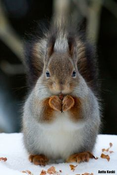 "This is how we say ""I love you"" in squirrel language. ♥"