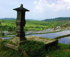 Paddy fields in Tenganang, Bali.