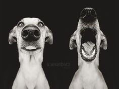 "More from the series, ""Nice Nosing You,"" by Elke Vogelsang, at www.wieselblitz.com"