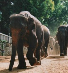 Sri Lanka is a wonderful travel destination, lets look at the highlights of this stunning little island. Perfect with kids! Elephant. Sri Lanka. Pinnawala. http://worldtravelfamily.com