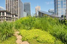 1000 images about rooftop gardens on pinterest green roofs rooftop
