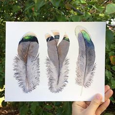 Brown & grey Crested Pigeon feathers - print from watercolour painting by Zoya Makarova. Also available in & sizes Feather Painting, Feather Print, Love Painting, Watercolor Print, Watercolour Painting, Crested Pigeon, Australian Artists, Wildlife Art, Art World