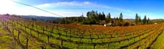 Chacewater Winery & Olive Mill- Ponderosa Vineyards