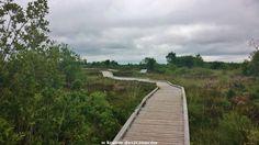 Tofrowisko nazwane tak jak miejscowość przy której się znajduje - Clara (Clara Bog) położone jest w hrabstwie Offaly. Uznane jest za Naturalny Rezerwat Przyrody i jako taki jest pod ochroną od roku... Sidewalk, Country Roads, Side Walkway, Walkway, Walkways, Pavement