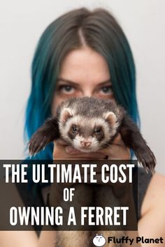 The Price Of Proudly owning Ferret Funny Animal Pictures, Cute Funny Animals, Cute Baby Animals, Cute Dogs, Pet Ferret, Ferrets Care, Cute Ferrets, Funny Memes, Animaux