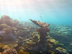 Amazing Maldives! Marine biology NGO work with Antipodeans Abroad