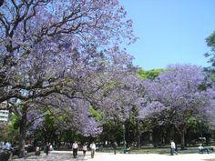 Plaza San Martin, Retiro. Ciudad de Buenos Aires