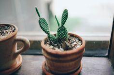 Certaines plantes sont plus appropriées dans des endroits spécifiques de la maison. Voici un petit guide des meilleurs emplacements selon les différents types de plantes.