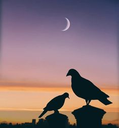 How lovely are Abdullah Evindar mixed media collages! In this series the artist combined silhouettes with nature and landscapes. Silhouette Photography, Moon Photography, Fine Art Photography, Dark Wallpaper, Cartoon Wallpaper, Moon Art, Sky Moon, Nature Artwork, Illusion Art
