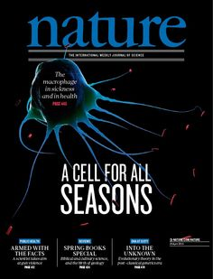 Nature, Volume 496 Number 7446. A macrophage attacking bacteria. Macrophages are phagocytic cells found in blood, lymph and in all mammalian tissue types. (Cover: SCIEPRO/SCIENCE PHOTO LIBRARY) Nature Publishing Group