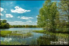 Britzer Garten (Mai 2016) 3 #BritzerGarten #Britz #Neukölln #Berlin #Deutschland #Germany #biancabuergerphotography #igersgermany #igersberlin #IG_Deutschland #IG_Berlin #ig_germany #shootcamp #shootcamp_ig #pickmotion #berlinbreeze #diewocheaufinstagram #berlingram #visit_berlin #AOV5k #landschaft #landscape