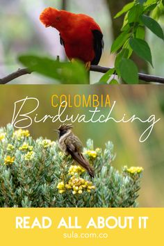 Best spots, birding trails, endemic species and where to find them. Basically, everything you need to know about bird watching in Colombia Bird Species, Travel List, Bird Watching, Continents, Conservation, South America, Tourism, Animals, Colombia