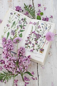 The Little Purple Cottage on Lilac Lane