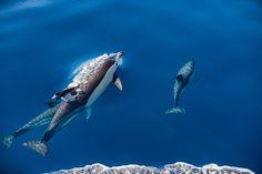 Golfinhos by Luís Godinho on 500px