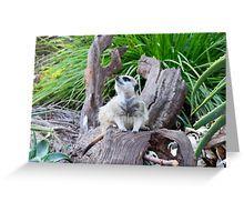 Meerkat On A Tree Log Looking Up Greeting Card