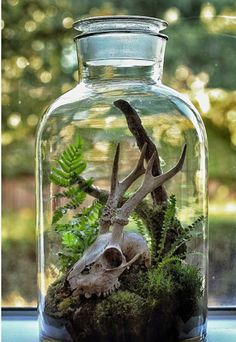 Beautiful terrariums with fossils, skulls, and other oddities by Ken Martin of Hermetica(London).