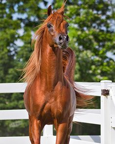 A Horse Is A Horse on Pinterest | Quarter Horses, Paint ...