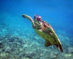 #Deshaies en #Guadeloupe une commune guadeloupéenne idéale pour faire de la #plongée sous marine aux #Antilles
