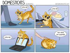 DomestiCats - Catblock by ShinePawArt.deviantart.com on @DeviantArt