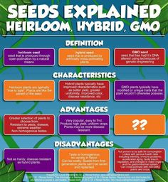 Seeds explained! Heirloom, hybrid, gmo... what is in YOUR garden?