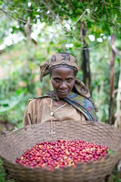 burundi coffee, coffee washing station, coffee cherries, coffee harvest