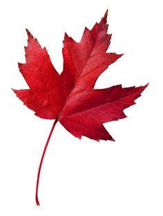 leaf.jpg (1778×2359)