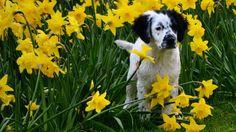 3 síntomas de alergia y algunos consejos. // 3 symptons of allergy in dogs and some advices for it.